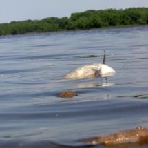 Dead Fish - Lake
